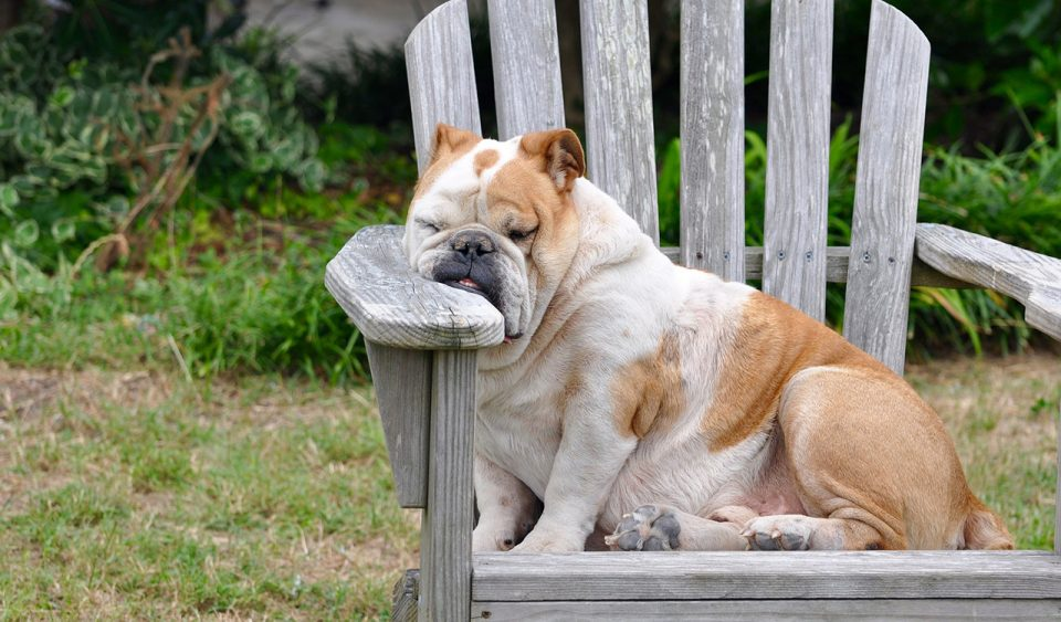 Tired dog on lawn chair