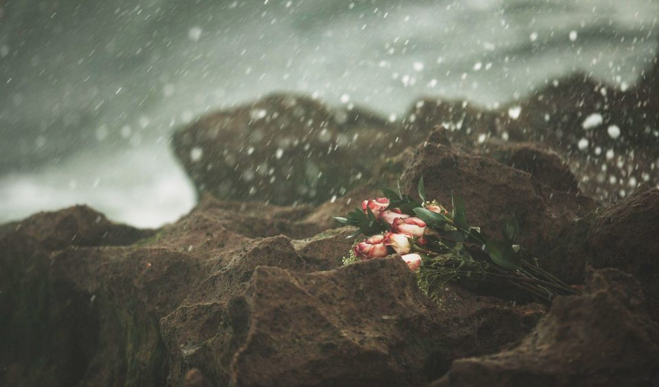 Roses on rocky sea shore